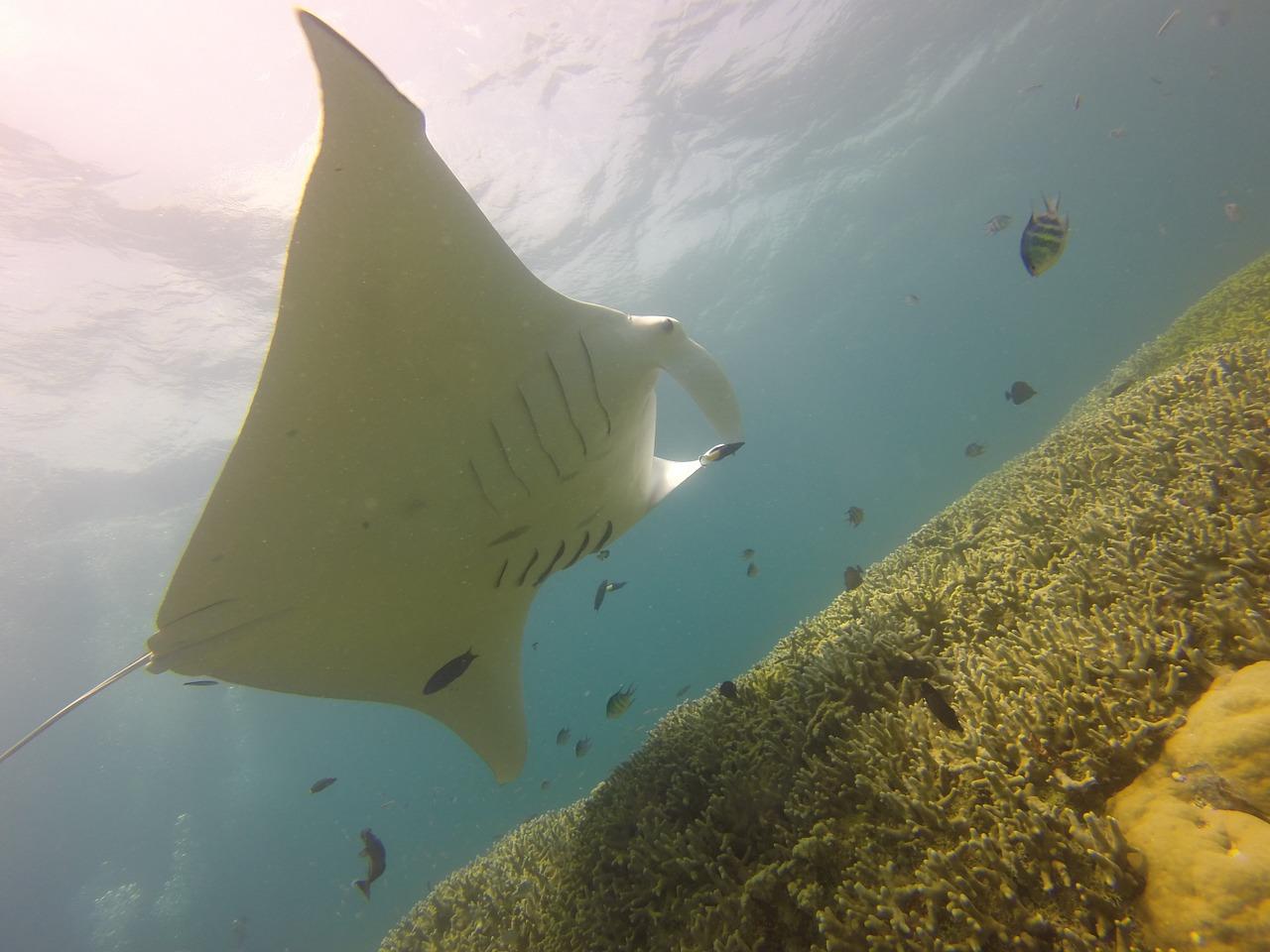 México crea una reserva oceánica para proteger la red ambiental