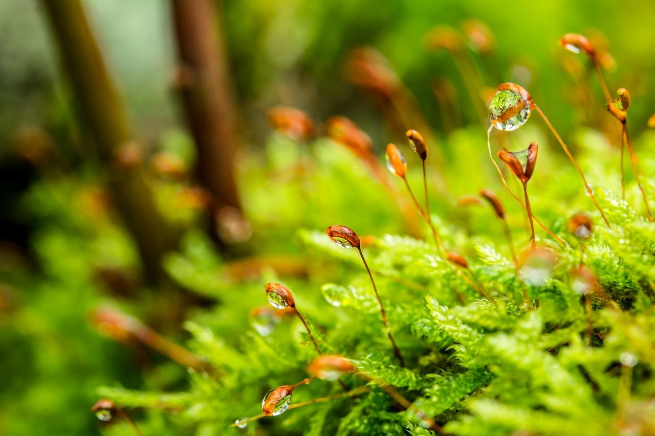 ¿Qué es la Red Ambiental?